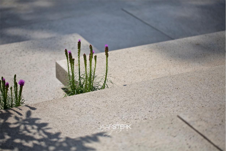 Winnaar van De tuin van het jaar 008