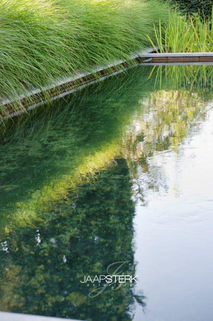 Zwemvijver met grassen 001